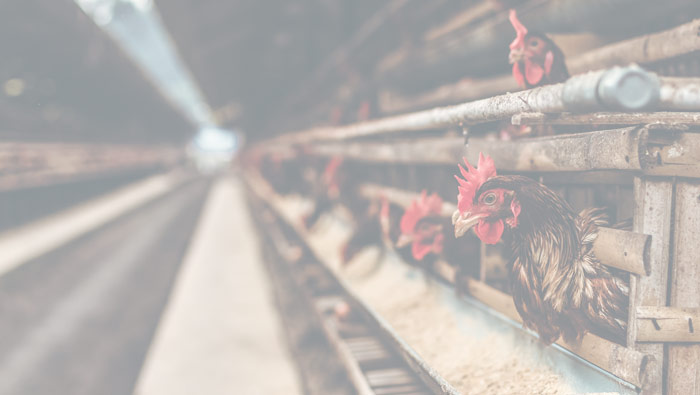 Did you Know? Requirements for Animal Food/Feed Manufacturers Include Preventive Controls