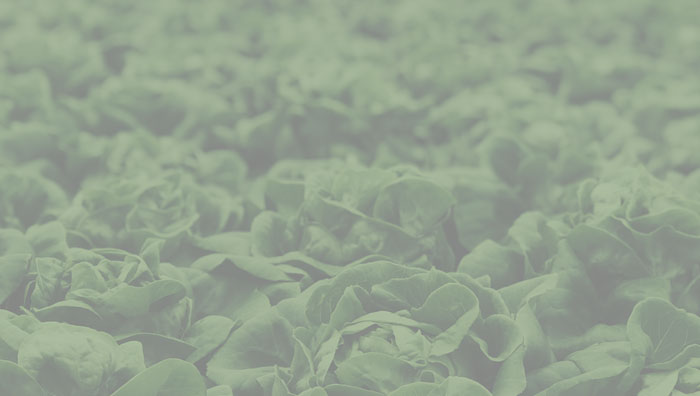 Cutting Edge Methods for Detecting Food Fraud