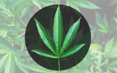 House Vote on Legalization of Marijuana Delayed
